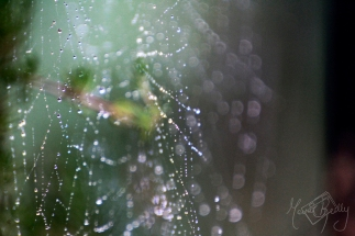 Scattered Rain