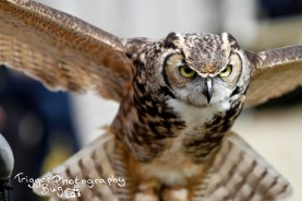 Incoming Owls