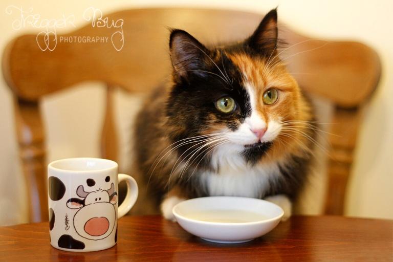 Crazy Cats Cafe Dublin